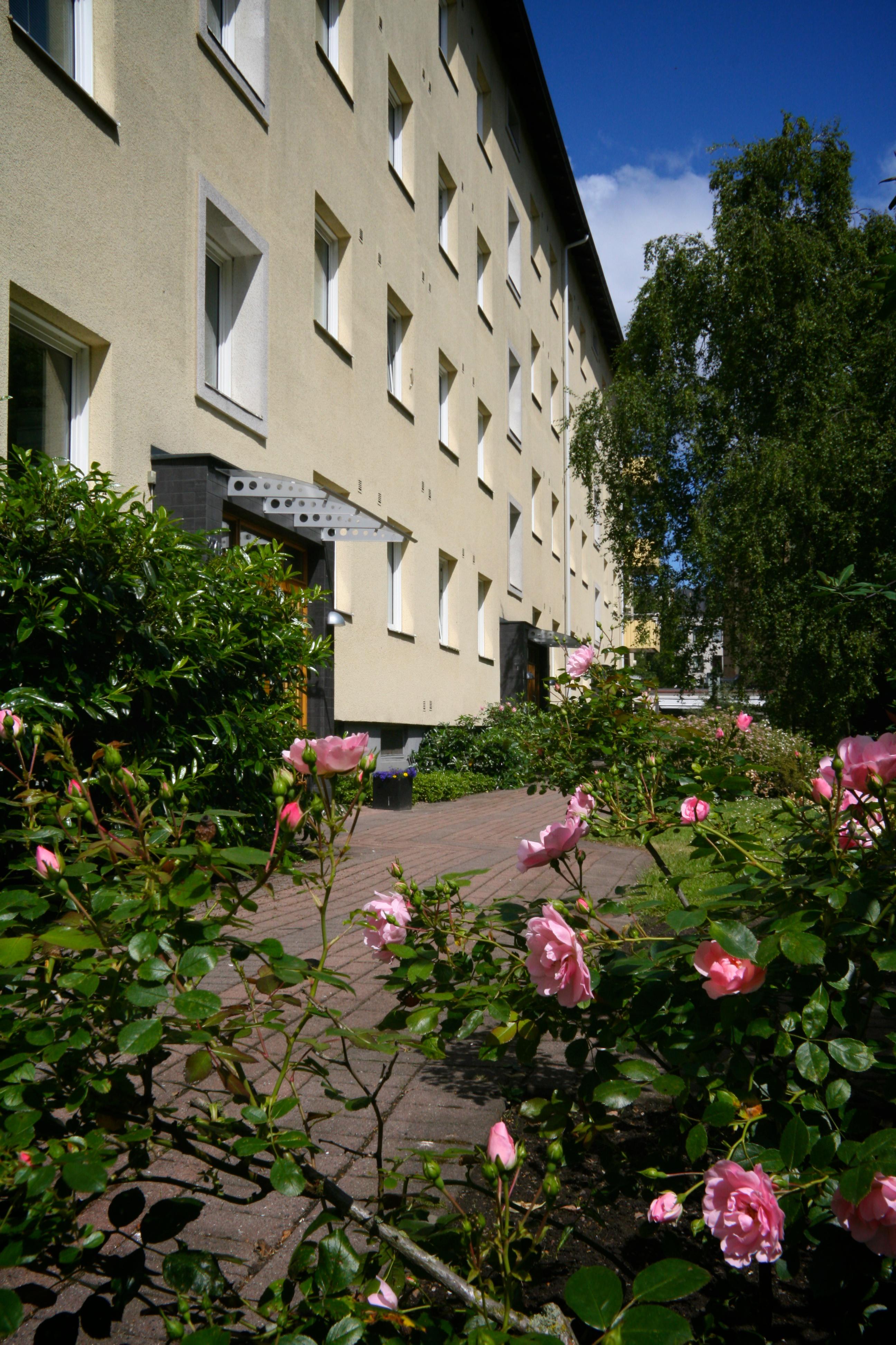 Vår vackra rosor på innergården